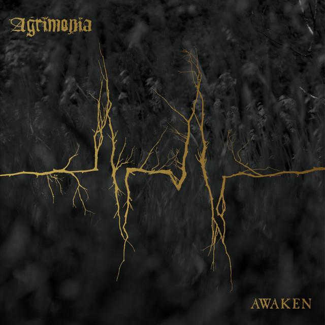 Agrimonia