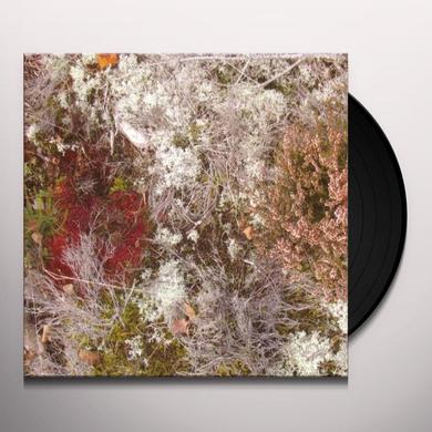 Fursaxa MYCORRHIZAE REALM Vinyl Record