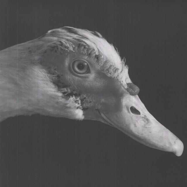 Be Svendsen GROSS KELLE (EP) Vinyl Record