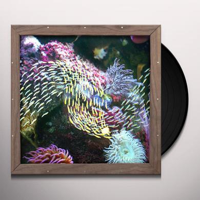 Quicksails MAYVILLE DREAM Vinyl Record