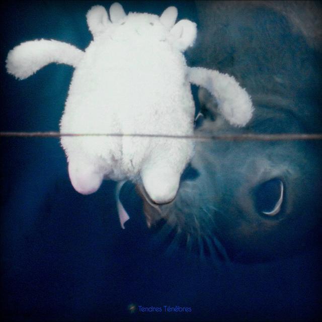 TENDRES TENEBRES / VARIOUS (UK) TENDRES TENEBRES / VARIOUS Vinyl Record - UK Import