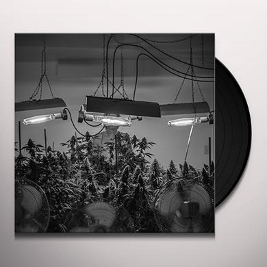 MARINOL NATION FIELD OF DREAMS Vinyl Record