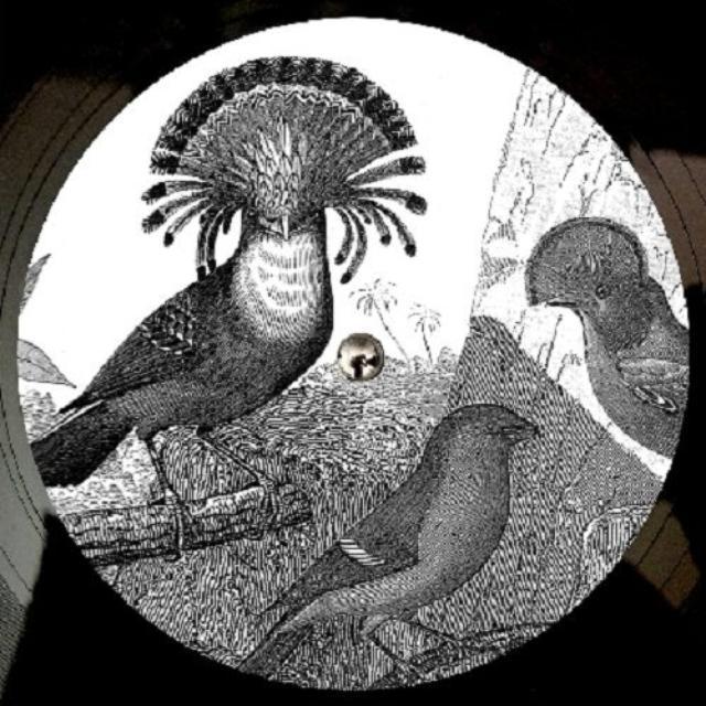 Anna Lunoe & Friends REAL TALK Vinyl Record